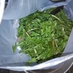 cercare erbe nei prati